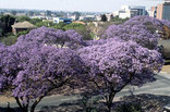 Zimbabwe - Harare in Spring