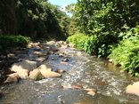 Roosfontein Bed and Breakfast/Coference Centre - Umbilo River