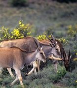 Karoo National Park Wildlife
