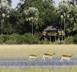 Botswana Classic Safari Camps - Kwetsani Camp