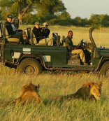 Botswana Safaris - Viewing lions