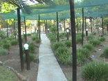 Tshimologo Farm Guest House