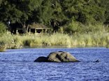 DumaTau Camp - Elephant infront of Duma Tau Camp