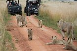 Kololo Game Reserve - Game Drive Welgevonden