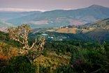 Mount Sheba