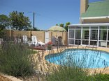 Murray Street Guesthouse - The pool garden