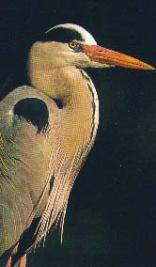 OPM Prozesky Bird Sanctuary