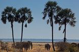 Mokuti Etosha Lodge - Elephants near Etosha Pan