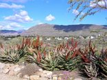 Karoo View Cottages - Karoo View Cottages Spring Flowers overlooks the village of Prince Albert and the Swartberg