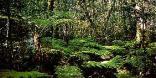 Outeniqua Hiking Trail