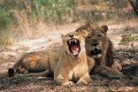 Entabeni Wildside Safari Camp