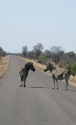 How to Get to Kruger Park