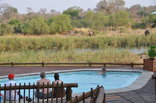 Sabie River Bush Lodge - Guests relaxing in the pool watching the Elephants cool off in the Sabie River