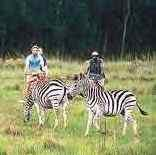 Swaziland Game Reserves