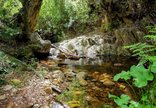 Pat Busch Private Nature Reserve - Streams & Pools on hiking trails at Pat Busch