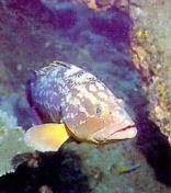 Diving - Port Elizabeth