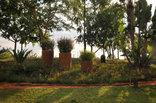 Tzaneen Country Lodge - Garden