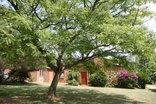 Fourways Gardens Guest Estate - Garden