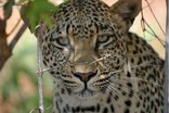 Morokolo Safari Lodge - Game Viewing