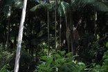 Mashutti Country Lodge - Rainforest
