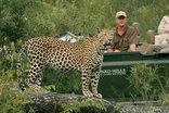 Leopard Hills Private Game Reserve - Game Drive Leopard