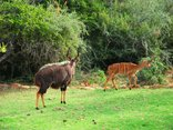 Valley Bushveld Country Lodge - Wildlife at the Lodge