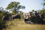Baobab Ridge Greater Kruger - Game drive