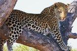 Baobab Ridge Greater Kruger - Game