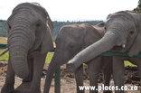 Knysna - Knysna Elephant Park