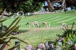 GolfersDream - GARDEN