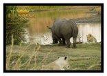 Elandela Luxury Lodge & Private Game Reserve