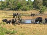Royal Thonga Safari Lodge - View from the hide onto the waterhole