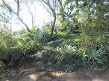 LoerieRoep - Garden