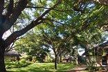 Bentley's Country Lodge - Garden