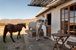Enjo Nature Farm - our horses like to visit our guests, here at the Oak Chalet