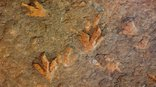 Maliba Mountain Lodge - Dinosaur Footprint Tour