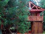 Sycamore Avenue Treehouses - Planequarium Treehouse