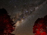 Sycamore Avenue Treehouses - Milky Way