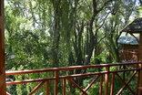 Haggards on Hilldrop B&B - Forest Views