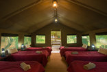 Bush Willow Tented Camp - Open plan tent - Conference bedding