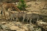 Nyala Safari Lodge - animals at waterhole