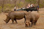 Kwa Madwala Private Game Reserve - Kwa Madwala Wilderness Drives