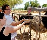 Highgate Ostrich Show Farm - Oudtshoorn