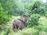 Moonriver Mountain Retreat - Kudu