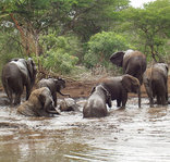 Game Lodges in KwaZulu-Natal