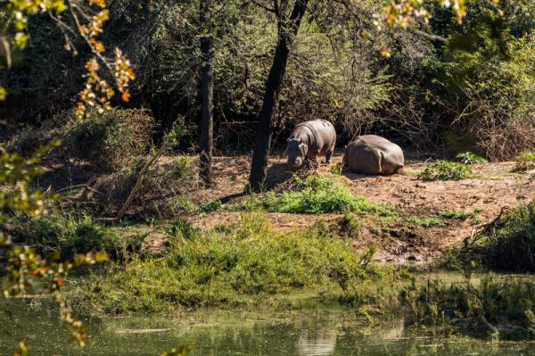 Hippos spotted at Palala Boutique Game Lodge