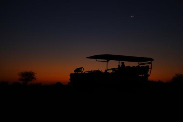 Evening safari