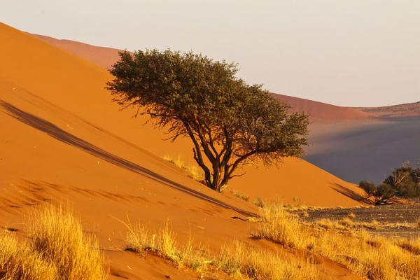 Namibia Visitors Information - 135305