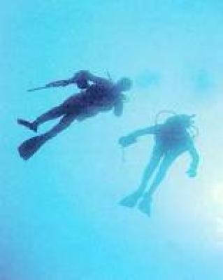 Diving at St Francis Bay