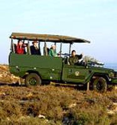 Self Drive Safari - Kruger Park